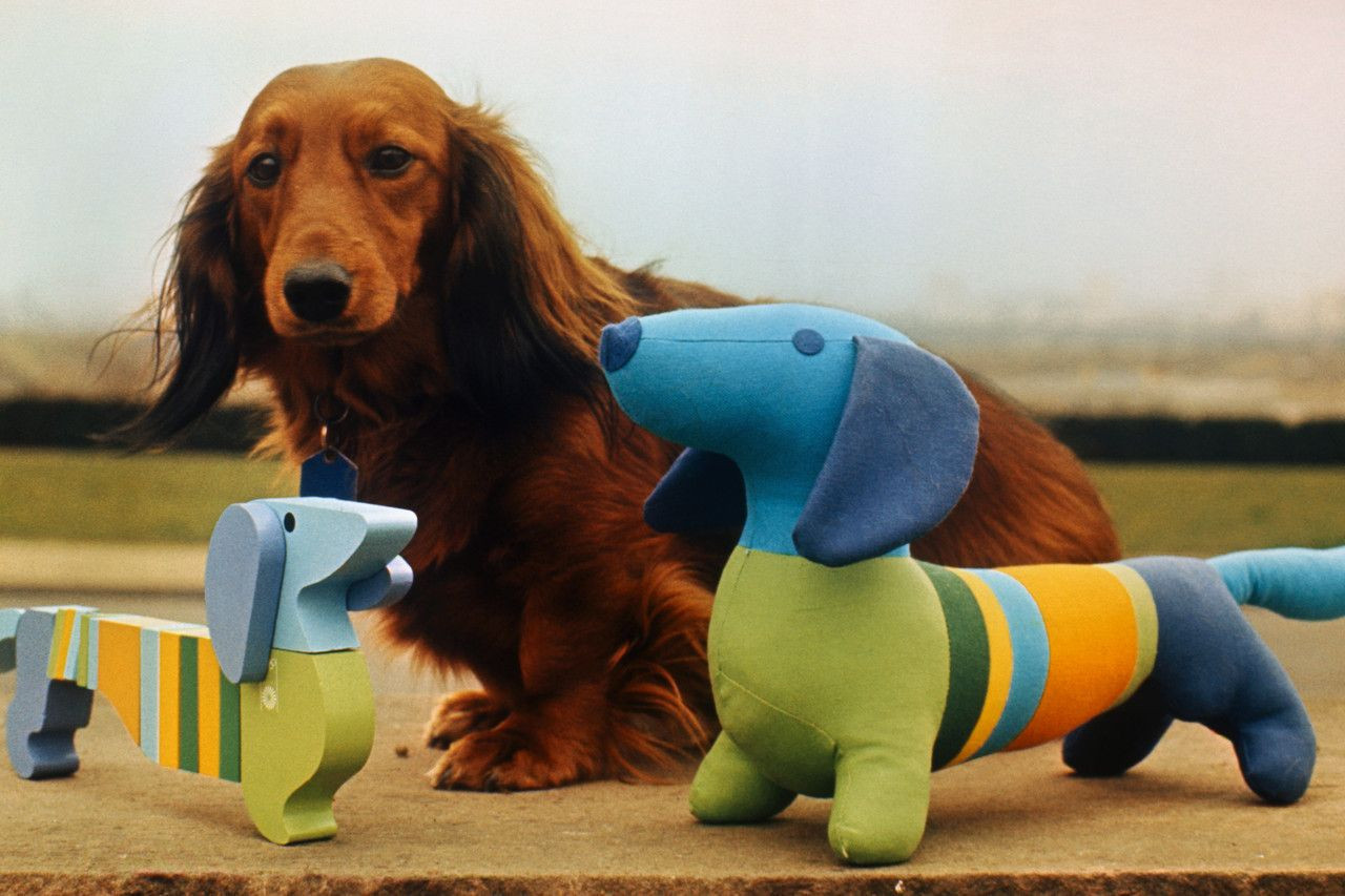 The 1972 Olympics in Munich saw the Games' first official mascot when Waldi, based upon a real long-haired dachshund called Cherie von Birkenhof, was created ©Getty Images