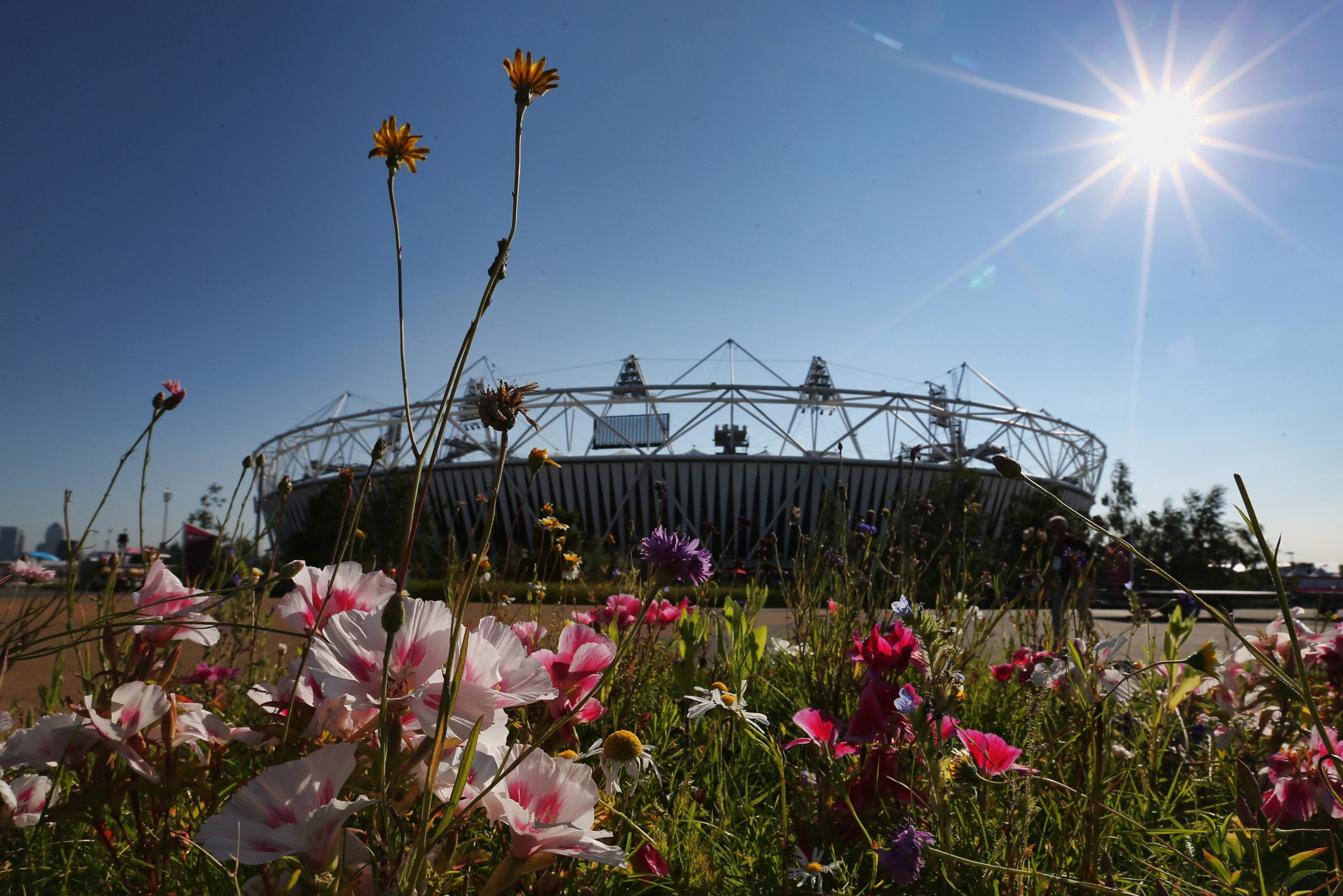Rare species found at London 2012's Olympic Park