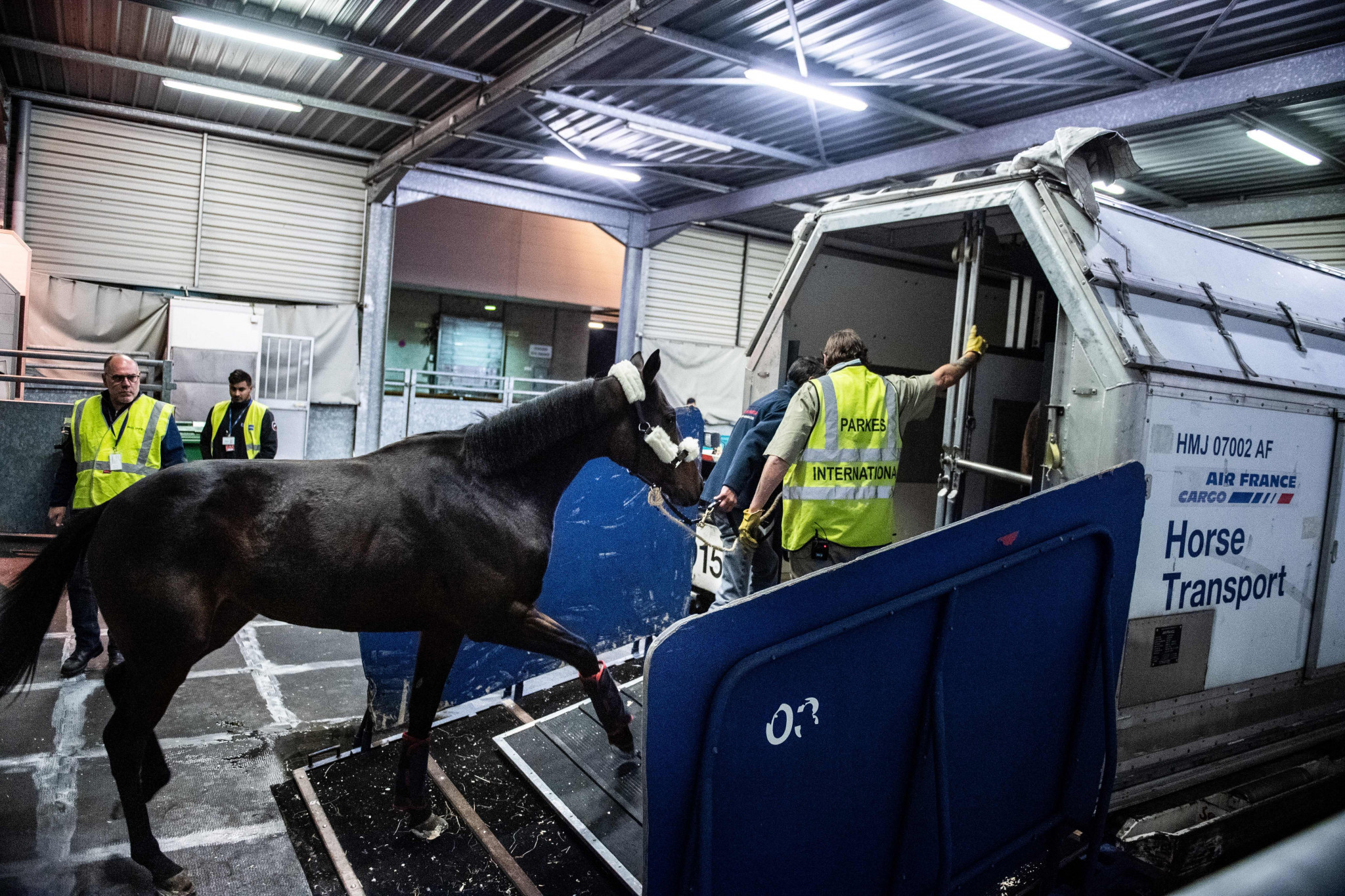 Digital passport proposed for cross-border horse movement after Brexit