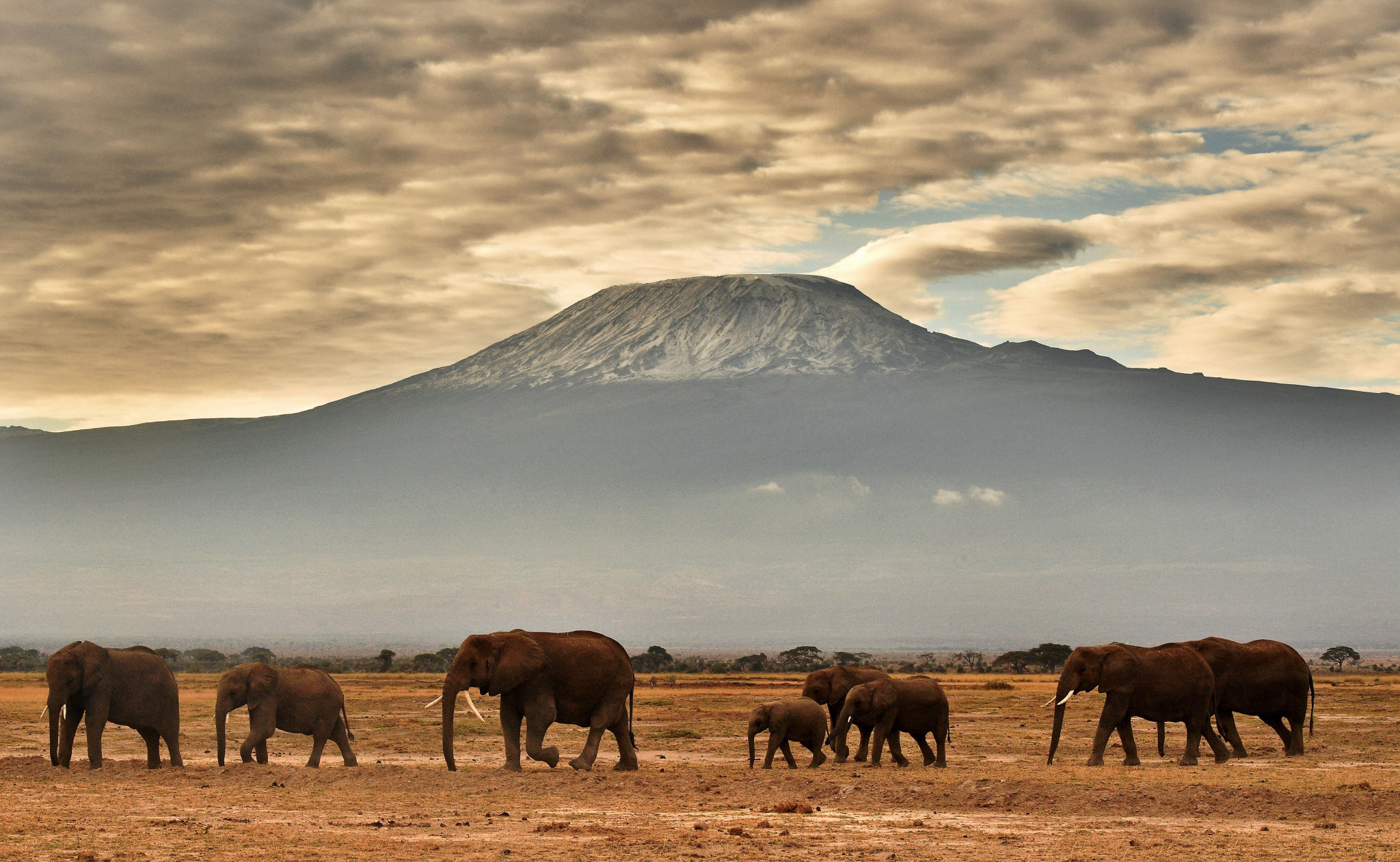 Mount Kilimanjaro is the highest mountain in Africa ©Getty Images