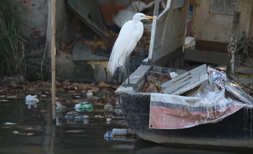 "World Sailing ""satisfied"" by progress made at pollution-hit Guanabara Bay"